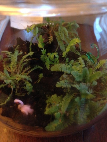 Another terrarium