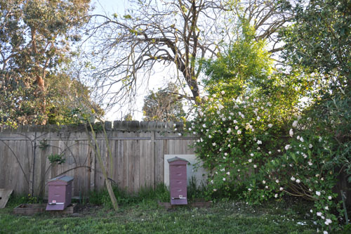 Beehives and rose