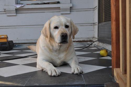 Hopper on the porch