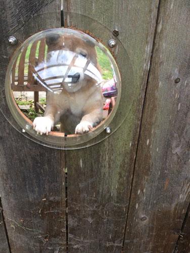 Neighbor dog looking in