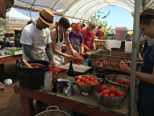 Labouring over tomatoes