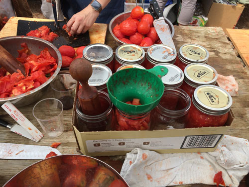 Canning tomatoes is a process