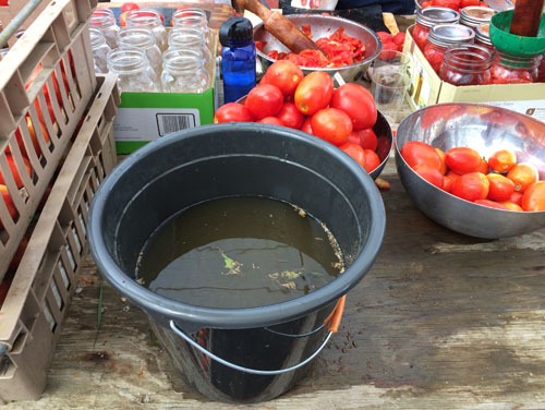 Washing and sorting tomatoes