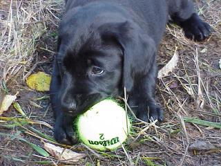 Rosie sucks at playing ball