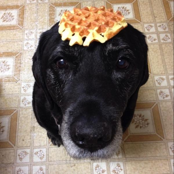 Wafflehead