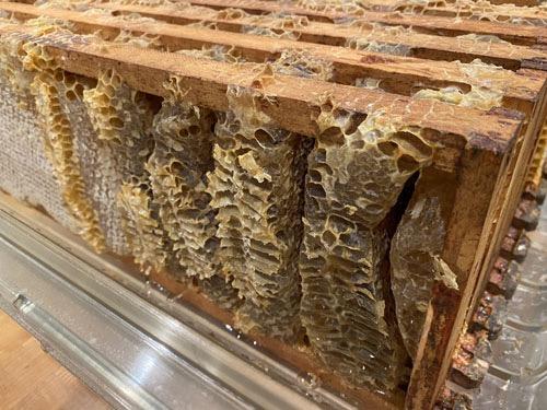 Honey comb built sideways across the frames